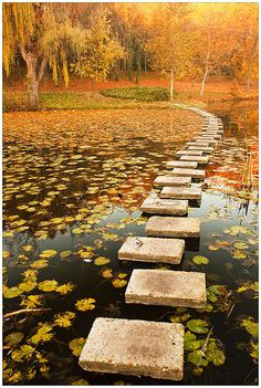 Autumn, Stepping stone at lake, Lipnik Park in Ruse, Bulgaria