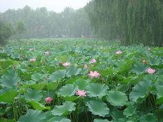 @ahhbby ♡ | plants | green stefani