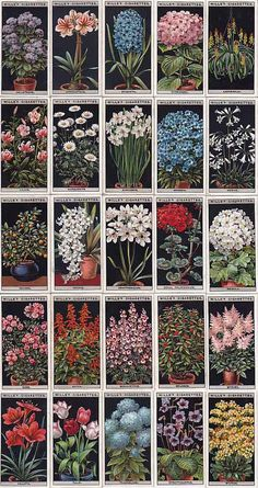 cigarettes card/シガレットカード【Flower Culture in Pots】 Vintage Botanical Prints, Botanical Drawings, Botanical Art, Vintage Prints, Flower Prints, Flower Art, Art Nouveau Design, Journal Stickers, Aesthetic Stickers