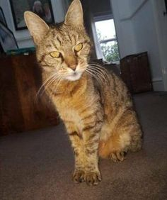 LOST CAT: 26/08/2017 - Sale, Trafford, Greater Manchester, England, United Kingdom. Ref#: L36115 - #CritterAlert #LostPet #LostCat #MissingCat