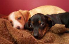Baby Warwick and Sasha