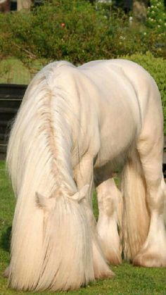 This is one beautiful draft horse and it's long hair looks nice but the whole body is weeeee hoooo