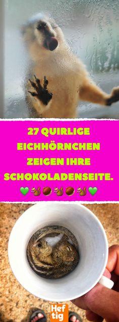 27 quirlige Eichhörnchen zeigen ihre Schokoladenseite. #eichhörnchen #herbst #wildtiere #fotos #lustig #humor Tier Fotos, Animal Photography, Squirrels, Post, Maine, Aquarium, Culture, Sweet, Funny