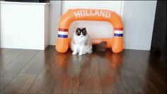 Someone Get This Cat A Soccer Contract Immediately