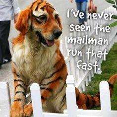 Tiger puppy