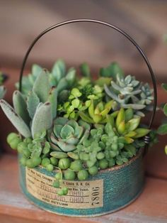 60 Charming Succulent Indoor Garden Ideas 2019 Page 6 of 64 Garden art Succulent Garden Diy Indoor, Succulent Landscaping, Succulent Gardening, Succulent Terrarium, Container Gardening, Indoor Gardening, Succulents In Containers, Cacti And Succulents, Planting Succulents
