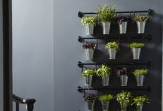 Ideas for indoor gardens at home