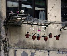 Hong Kong Flora – Michael Wolf on Hong Kong vernacular culture | Invisible Ph t grapher Asia (IPA) | 亞洲隱形攝影師