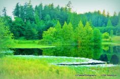 Reflection Photo Water Photography Pond Art by LDTwedePhotography, $7.99