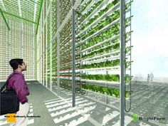 hydroponic vertical farm