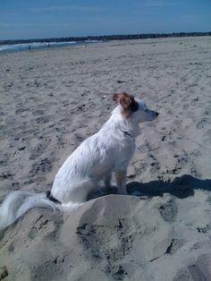 Oregon Coast is Pet   Friendly!  http://www.oregonbeachvacations.com/