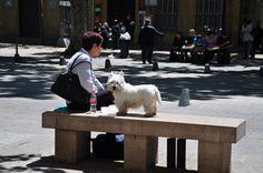 Dog-spotting in Provence.