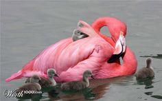 how do they get their necks ??Flamingo Mom and babies