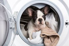 6 Clever Tricks Pet Owners Use To Keep Their Homes Clean