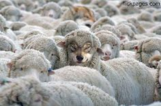 Beware of Wolves in Sheeps Clothing.They're everywhere.Guard your heart and be careful who you trust...