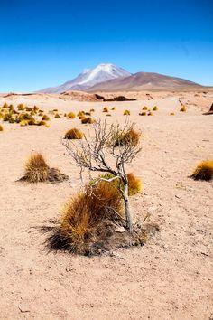 Salar de Uyuni 3 Day Salt Flat Tour with Red Planet Expeditions