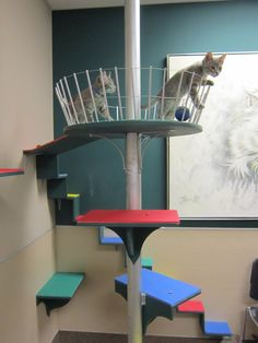 Our new cat enrichment room that volunteers can take cats into and interact with them while they are waiting to be put up on the adoption floor.