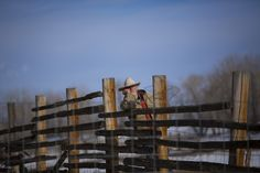 Montana's Spring Lambs - Jim Marshall caught in a contemplative pause against the wooden fence. Credit: Catherine Yrisarri   © The Weather Channel
