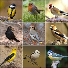 Ezek madarak vendégeskednek a kertekben télen | Balkonada Pretty Birds, Beautiful Birds, Feeding Birds In Winter, Cement Art, Bird Tree, Forest Animals, Bird Species, Earth Day, Amazing Nature
