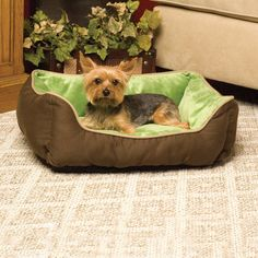 Amazon.com : K&H Manufacturing Self-Warming Lounge Sleeper Small Mocha/Green 16-Inch by 20-Inch : Self Warming Dog Bed : Pet Supplies $23.99