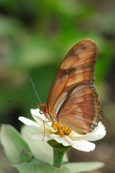Lovely Little Gold Butterfly