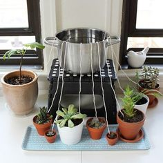 Don't let your houseplants suffer while you're away from home. Rig up this DIY self-watering wicking system. #HomeHydroponicStystems