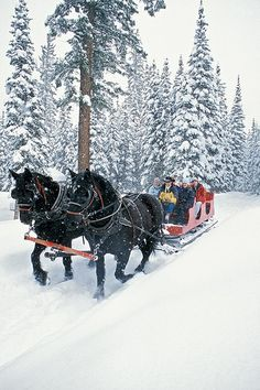 How many times did Mom and Dad sing Over the River and Through the Woods with us on the way to Grandma's house...Had us dreaming of snowy days and sleigh rides.