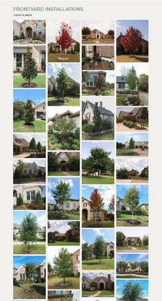 Which trees are best for Frontyards in North Texas / Treeland Nursery Trees And Shrubs, Trees To Plant, Landscape Architecture, Landscape Design, Tree Care, Growing Tree, Tree Designs, Front Yard Landscaping, Picture Design
