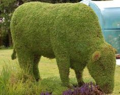 An amazing work of garden art.  This must call for hours upon hours of delicate hand pruning and months of tending.