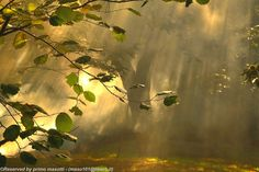 the silence, the autumn - Missano - (zocca modena italy) _2473_ DVD 15 by primo masotti on 500px