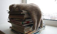 Naptime! #Cats #Books