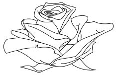 line art clipart for roses Drawing Practice, Line Drawing, Drawing Sketches, Drawings, Free Pictures, Free Images, Image Icon, Art Clipart, Floral Flowers