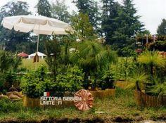 Vivaio di Conifere Esotiche