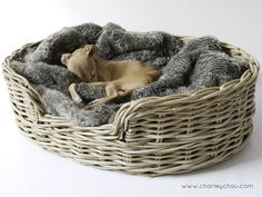 Charley Chau Greywash Rattan Dog Basket dressed with Faux-Fur Blanket in Squirrel - Theo seems to like it!