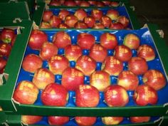 """I love you"" apples for Valentine's Day (from Genesis Fresh in Poland)"