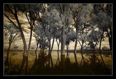 Swamp Forest by `gilad on deviantART