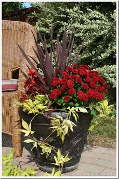 Planter Ideas Fall planter will last until a hard frost & then replace the potato vine & begonia w/pansies.Fall planter will last until a hard frost & then replace the potato vine & begonia w/pansies. Patio Planters, Fall Planters, Autumn Planter Ideas, Container Flowers, Container Plants, Gemüseanbau In Kübeln, Fall Containers, Succulent Containers, Potato Vines
