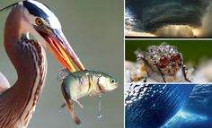 50 National Geographic's Award Winning Photographs - Best Photography Showcase. Follow us www.pinterest.com/webneel