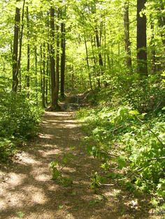 Mohican State Park Forest Hiking Trails