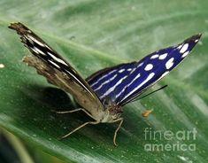 #butterfly #ButterflyHouse #nature #beauty #macro