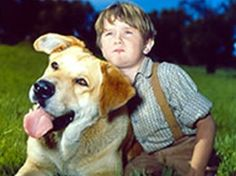 OLD  YELLER~a mutt found at the CA. Dog Pound, by Disney People always looking for animals.  Named him SPIKE, he grew to 170+ lbs...Looked like a yeller lab...but the size spoke of mastiff? in the mix.  Smart...and One of the Famous Disney Movies.  Happy, Real SAD, and Ending Giving you hope for the New Pup that looks just like him. Some Guy on the net is calling him () blck mouth cattle dogs..he shows Old Yeller in his Photo of the Dogs for Sale, SOME Gimmick huh? Yeller was a MUTT!