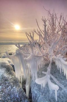 Sunset and Ice