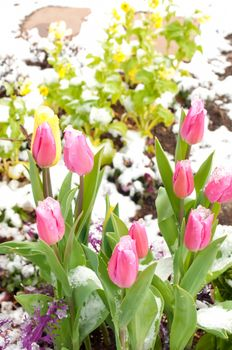 almost spring....