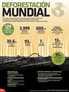 un artículo y infografía hablando de estadísticas con respecto a la deforestación.