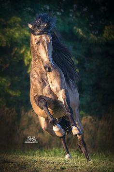 A Great Image ~ StunningSteedsPhoto-7187,  cheriprill.smugmug*