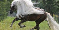 The Most Expensive and Beautiful Horses in the World