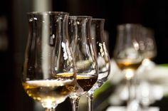 Com a melhor relação preço e qualidade, vinhos premiados poderão ser comprados diretamente dos produtores na Feira de vinhos.