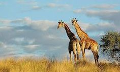 Image result for south africa safari