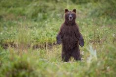 Hiker Describes Being Followed by 2 Bears in Connecticutt: 'I Figured if I Run, I'm Their Dinner'  8/31/15