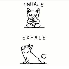 """2,930 Likes, 116 Comments - Elephant Journal (@elephantjournal) on Instagram: """"Relax, it's Doga. 🐶 Save #elephantjournal, get our quality newsletter, free, here:…"""""""